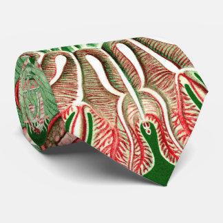 Ernst Haeckel Discomedusae (Aurelia) Neck Tie