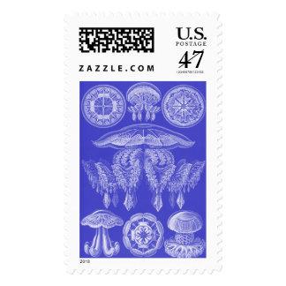 Ernst Haeckel Discomedusae III Stamp