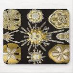 Ernst Haeckel - Echinidea Mouse Pad