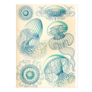 Ernst Haeckel el | Leptomedusa el | Thecate Postales