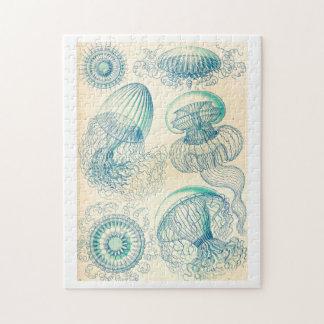 Ernst Haeckel el | Leptomedusa el | Thecate Puzzle