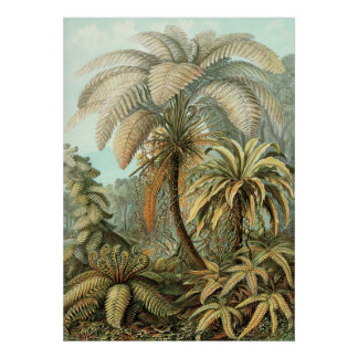 Ernst Haeckel - Filicinae2 Poster