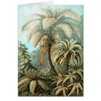 Ernst Haeckel - Filicinae Card
