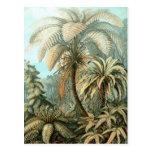 Ernst Haeckel - Filicinae Post Card