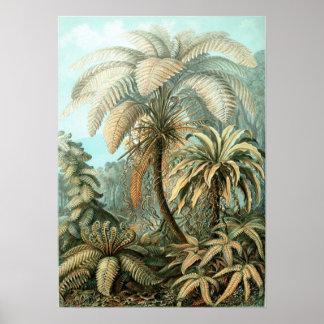 Ernst Haeckel - Filicinae Posters