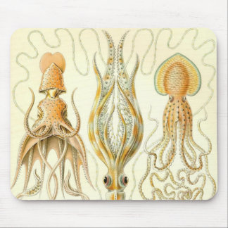 Ernst Haeckel - Gamochonia Detail Mouse Pad