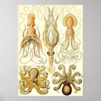 Ernst Haeckel - Gamochonia Impresiones