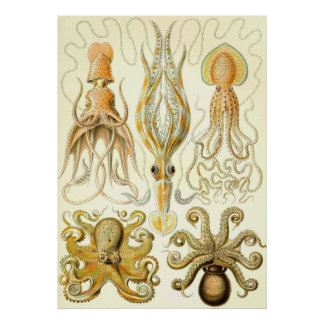 Ernst Haeckel - Gamochonia Posters