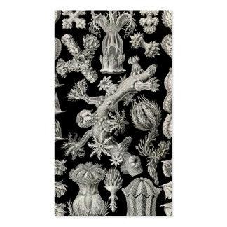 Ernst Haeckel Gorgonia Business Card