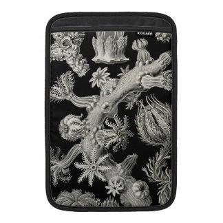 Ernst Haeckel Gorgonia MacBook Sleeves