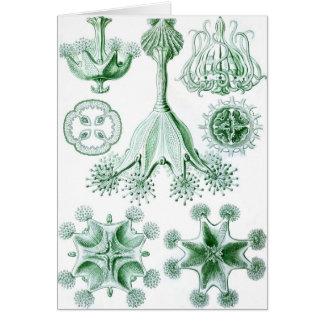 Ernst Haeckel Green Stauromedusae Card