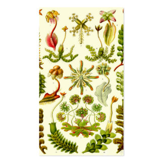 Ernst Haeckel Hepaticae Business Card