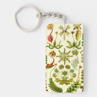 Ernst Haeckel Hepaticae Double-Sided Rectangular Acrylic Keychain