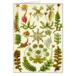 Ernst Haeckel - Hepaticae Greeting Card