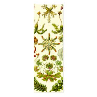 Ernst Haeckel Hepaticae Mini Business Card