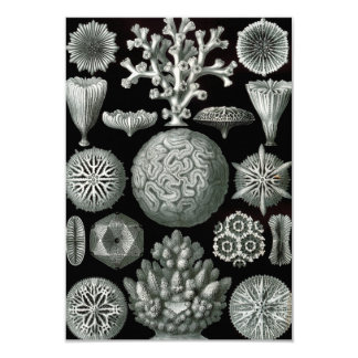 Ernst Haeckel Hexacorallia Coral Card