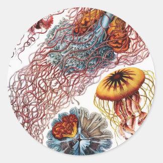 Ernst Haeckel Jellyfish Sticker