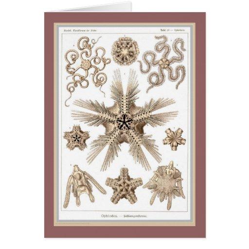 Ernst Haeckel - Kuntsformen der Nature - Tafel 10 Greeting Card