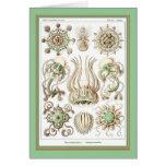 Ernst Haeckel - Kuntsformen der Nature - Tafel 16 Greeting Cards