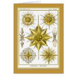 Ernst Haeckel - Kuntsformen der Nature - Tafel 21 Greeting Card