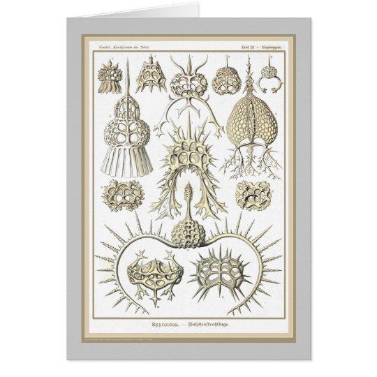 Ernst Haeckel - Kuntsformen der Nature - Tafel 22 Card