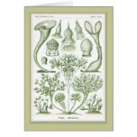Ernst Haeckel - Kuntsformen der Nature - Tafel 3 Greeting Card