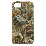 Ernst Haeckel - Lacertilia iPhone 5 Case-Mate Cárcasas
