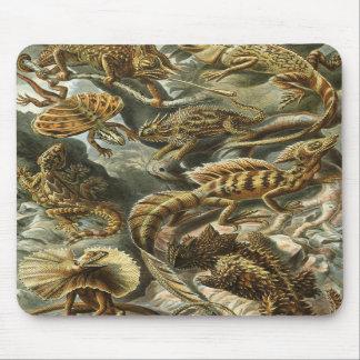 Ernst Haeckel - Lacertilia Mouse Pads
