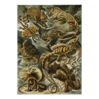 Ernst Haeckel - Lacertilia Poster