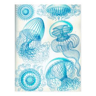 Ernst Haeckel Leptomedusae jellyfish Postcard