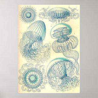 Ernst Haeckel - Leptomedusae Poster