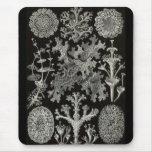 Ernst Haeckel - Lichenes Mouse Pad