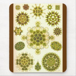 Ernst Haeckel - Melethallia Alternate Mouse Pad