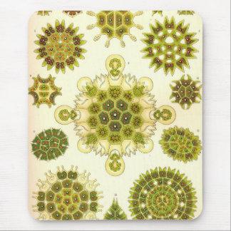 Ernst Haeckel - Melethallia Mouse Pad