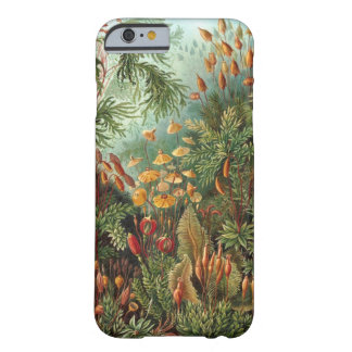 Ernst Haeckel - Muscinae Barely There iPhone 6 Case