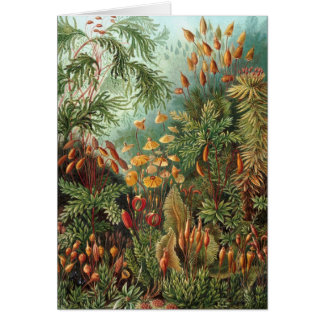 Ernst Haeckel - Muscinae Card