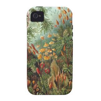 Ernst Haeckel - Muscinae iPhone 4 Cases