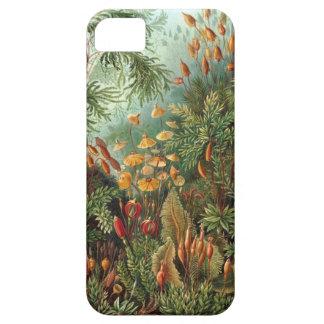 Ernst Haeckel - Muscinae iPhone 5 Cases