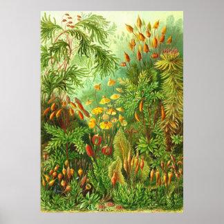 Ernst Haeckel - Muscinae Impresiones