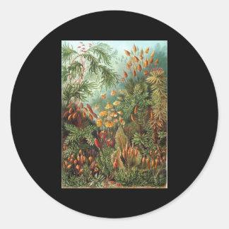Ernst Haeckel Muscinae Stickers