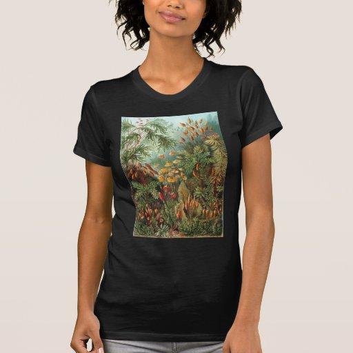 Ernst Haeckel Muscinae T-shirts