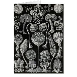 Ernst Haeckel - Mycetozoa Greeting Card