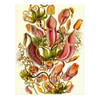 Ernst Haeckel - Nepenthaceae Postcard
