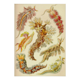 Ernst Haeckel - Nudibranchia Posters