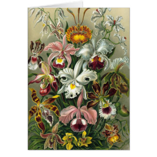 Ernst Haeckel - Orchidae Card