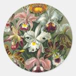 Ernst Haeckel - Orchidae Etiquetas