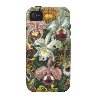 Ernst Haeckel - Orchidae iPhone 4/4S Cases