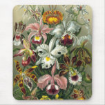 Ernst Haeckel - Orchidae Mouse Pad