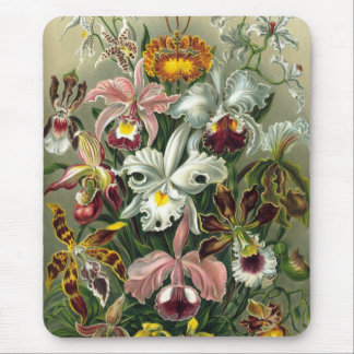 Ernst Haeckel - Orchidae Mouse Pads
