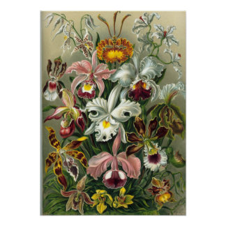 Ernst Haeckel - Orchidae Poster